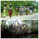 Mangrove à Assinie