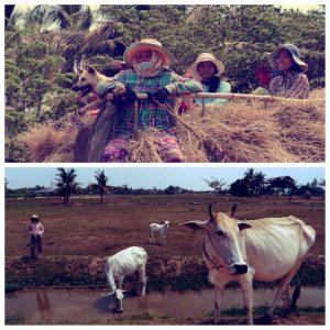 paysans - cambodge