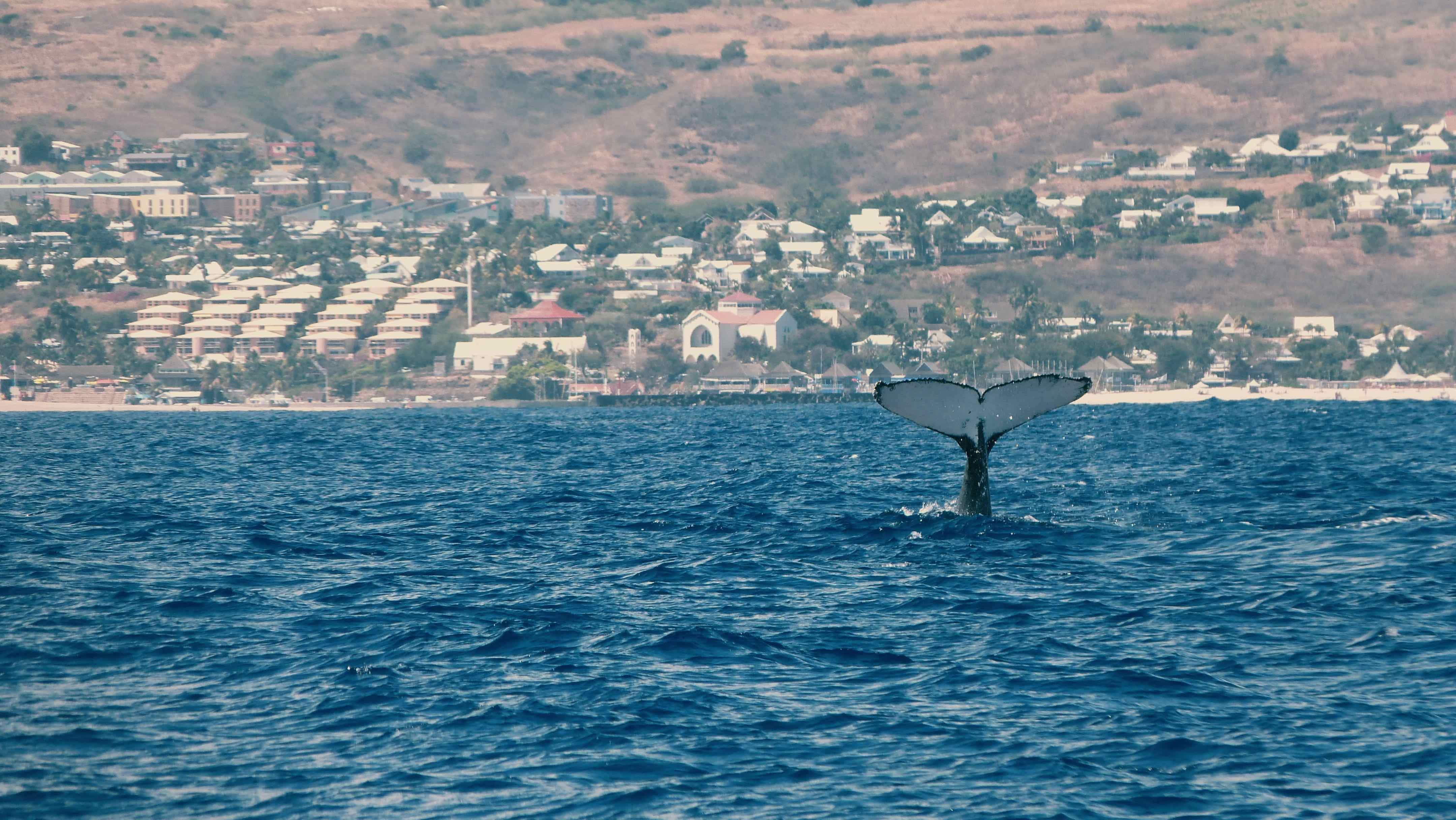 baleines à la réunion