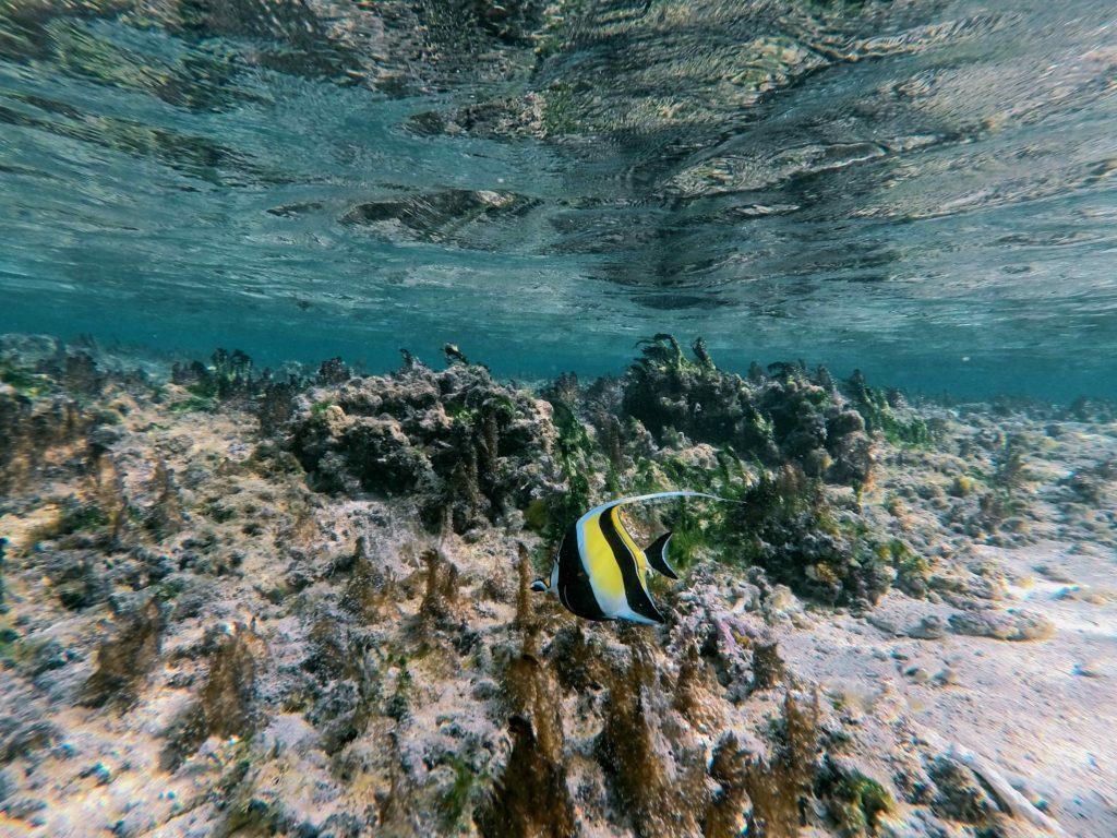 snorkeling-lagon-reunion