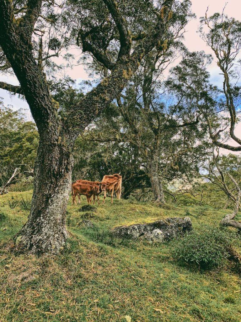 plaine des tamarins cirque de mafate