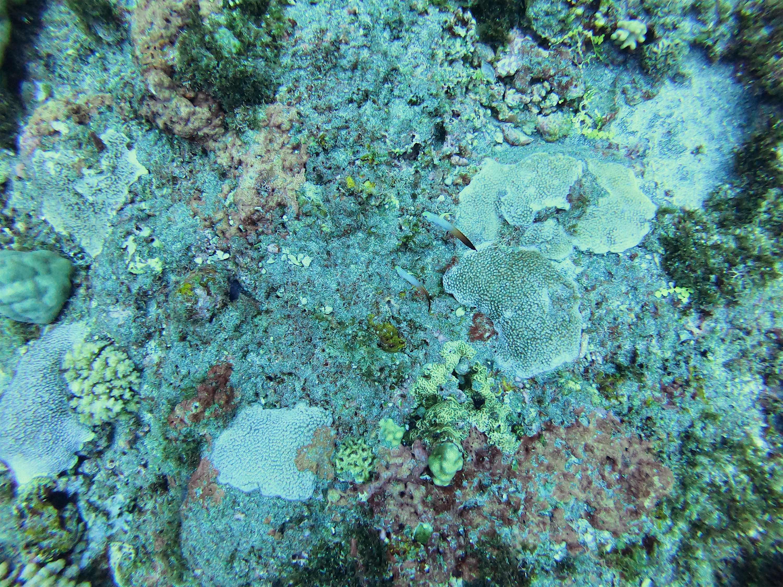 coraux plonger ile de la réunion