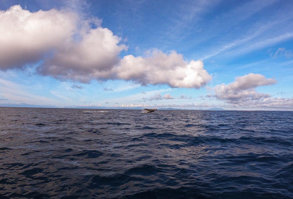 baleines nosy be