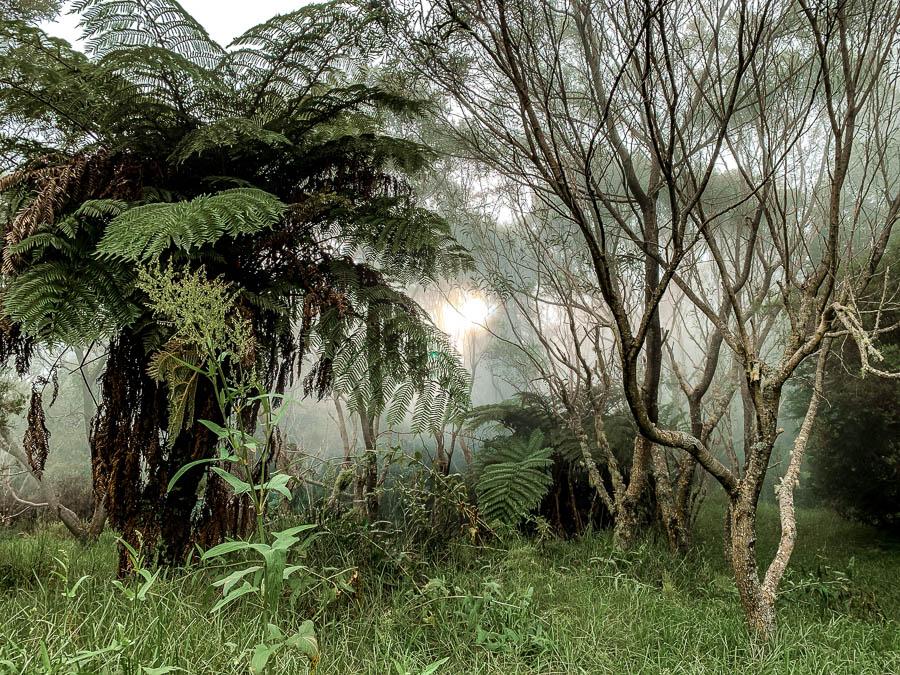 notre dame de la paix forêt spot de bivouac la réunion