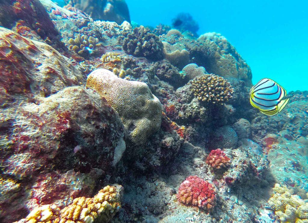 sec jaune spot de plongee reunion coraux